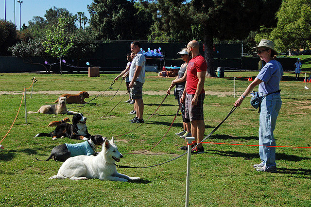 HDOC Dog training classes novice obedience Griffith Park Los